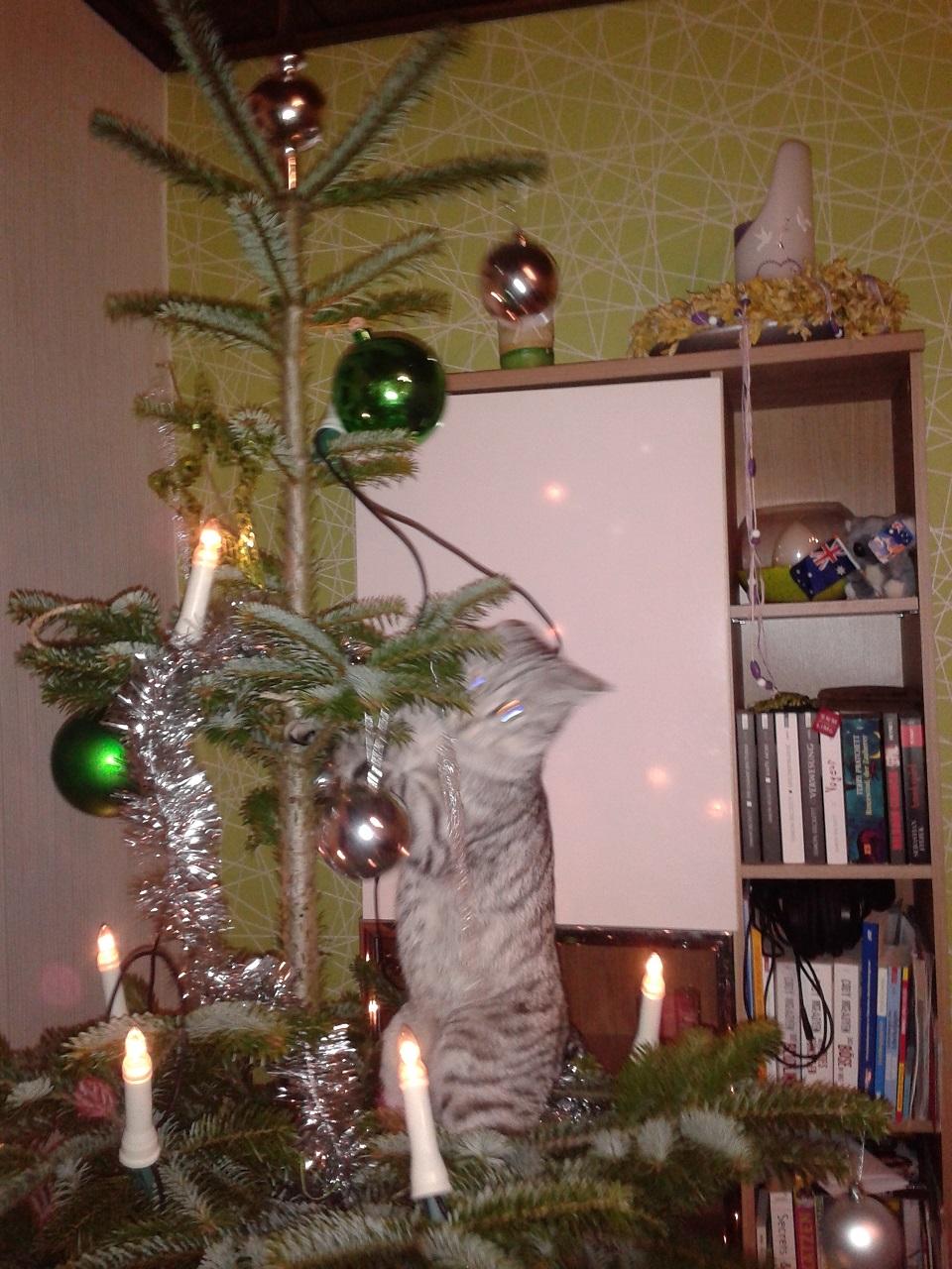 Wer Macht Mit Beim Weihnachtswichteln 2014 Was Liest Du