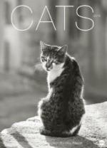Cats Edition - Kalender 2019