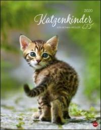 Katzenkinder Posterkalender 2020 - Monika Wegler
