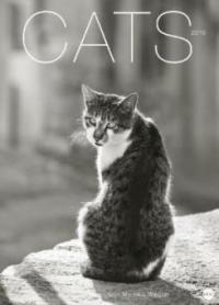 Cats Edition - Kalender 2019 - Monika Wegler